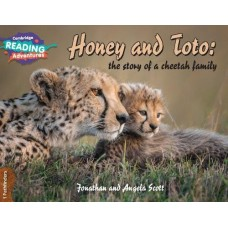 1 Pathfinders Honey and Toto: the story of a cheetah family